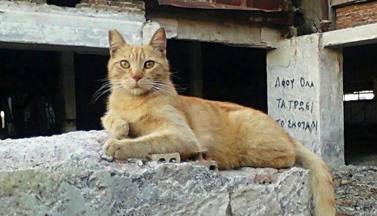 Ζώα Ελληνικό