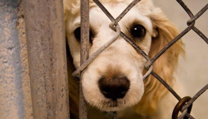 προστασία ζώων εγκύκλιος