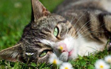 έξυπνη εφαρμογή μρταφράζει νιαουρίσματα γατών