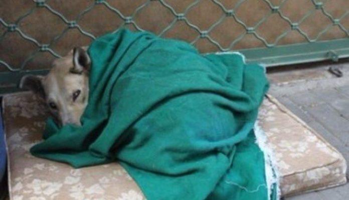 συνελήφθη άνδρας πυροβόλησε σκότωσε σκυλί