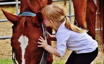 ζψοθεραπεία τα ζώα προσφέρουν φάρμακο θεραπείας