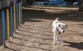 Νέα Σμύρνη Πάρκο για σκύλους