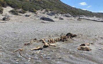Βρέθηκε σκελετός τριών μέτρων Κρήτη